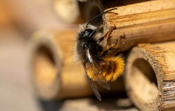A bee sitting on a wooden bee hotel.