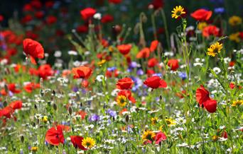 A brightly coloured wildflower meadow.