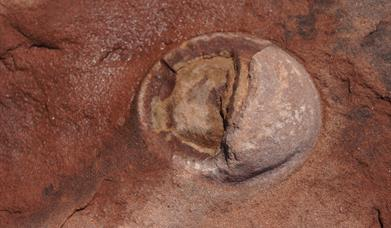A fossilised dinosaur egg.