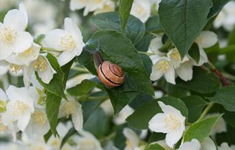 A snail on some orange blossom.