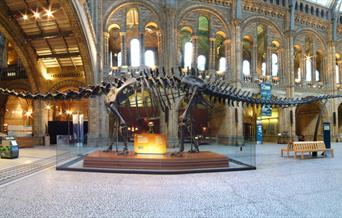 Dippy at the National History Museum, without any visitors.
